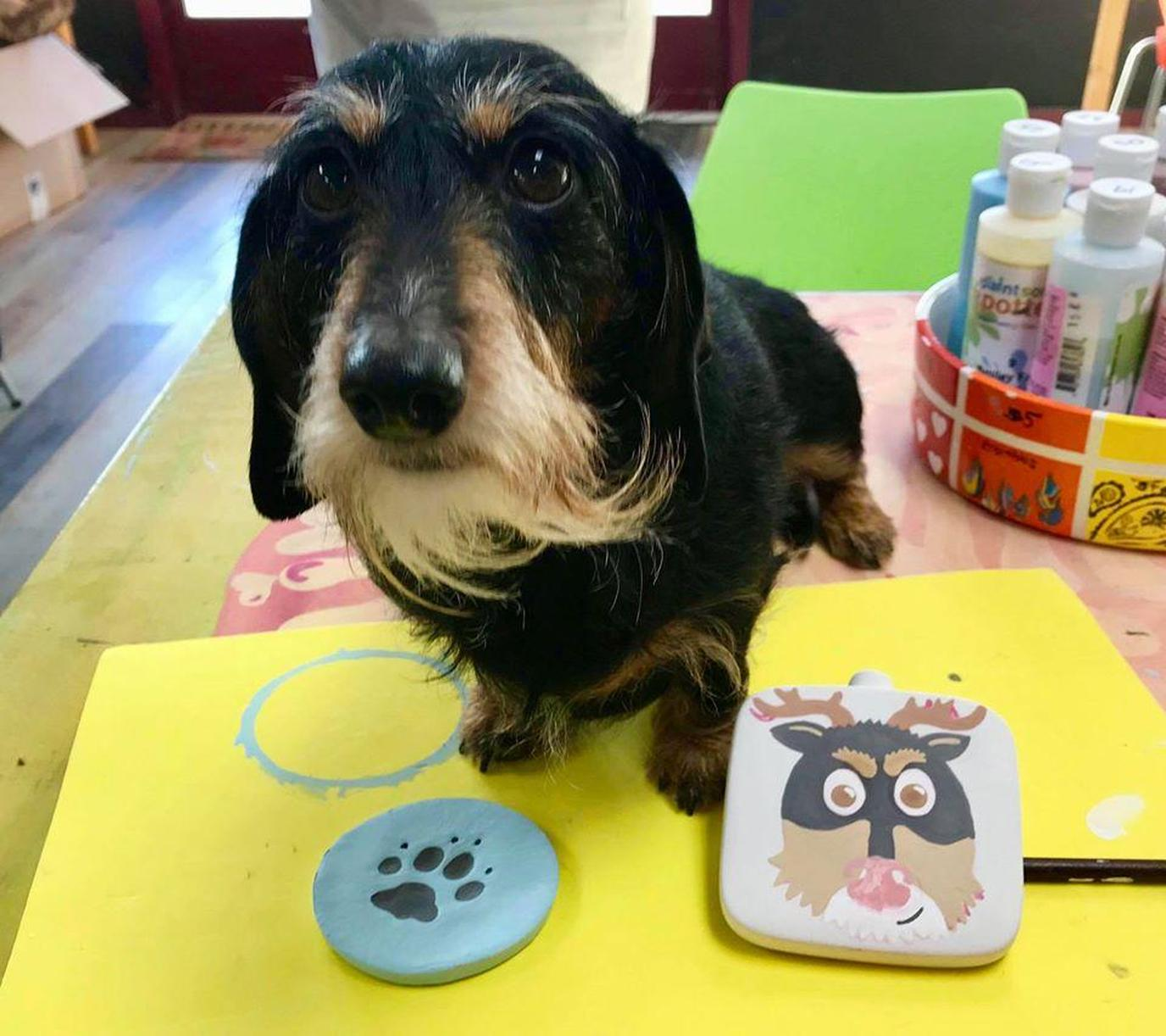 Try pottery making, canvas painting, glass fusing and more at pet-friendly PaintSome Pottery.