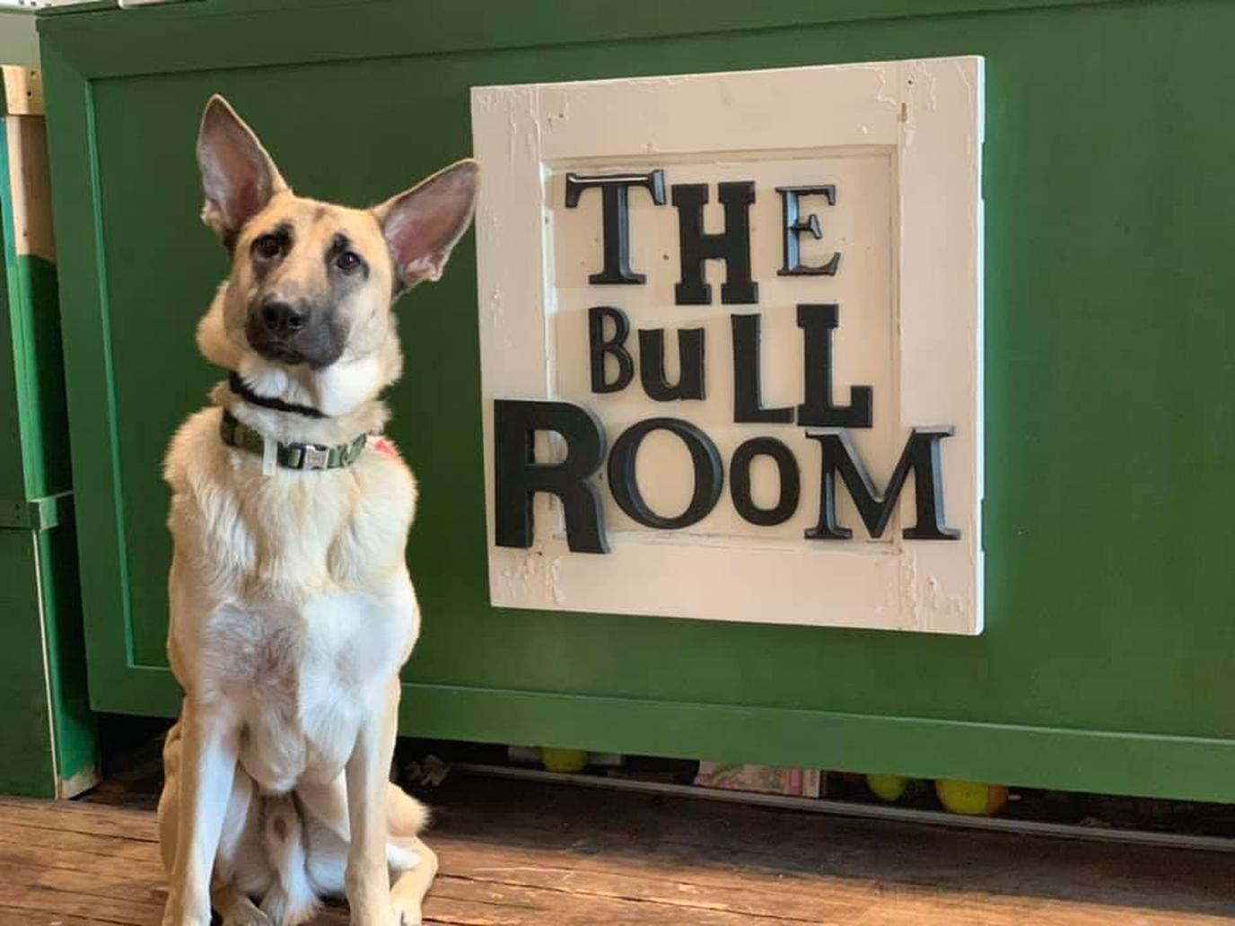 Leashed dogs are welcome at paint classes at The Bull Room in Aberdeen, NC.