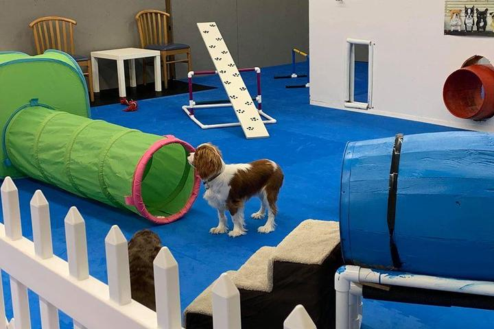 Stay and Play at America's Finest Indoor Dog Parks