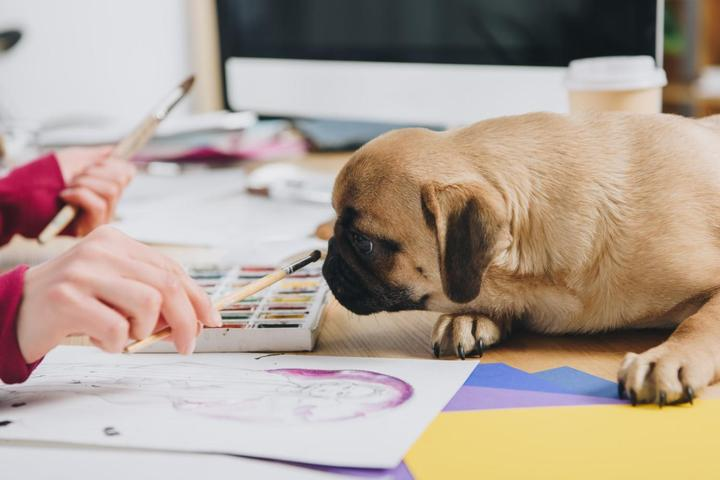 8 Art Studios Where You Can Paint With Your Pet