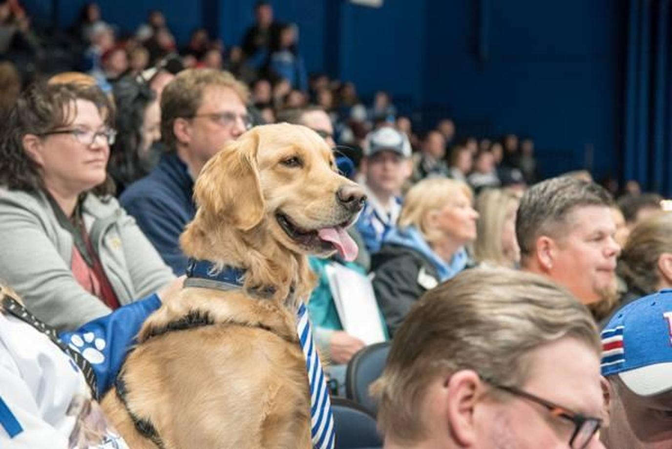 A Golden Retriever Sits in the Stands at a Dog-Friendly Hockey Game in New York.
