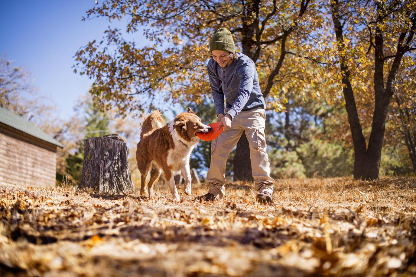A Man Plays Frisbee With His Healthy Dog in Fall.