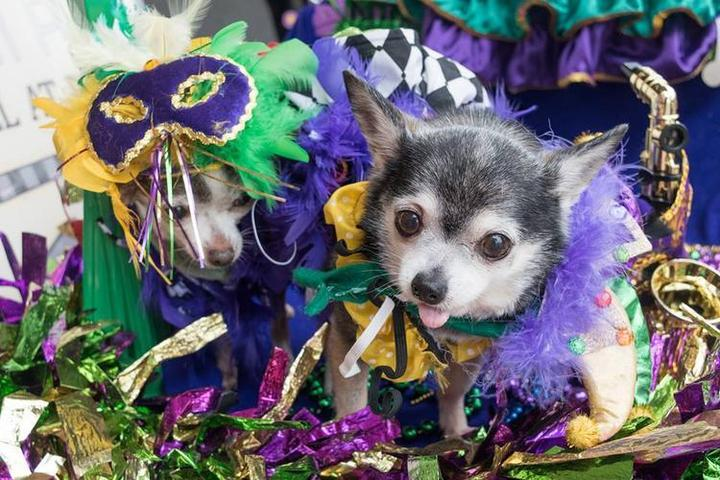 The Most Dog-Friendly Mardi Gras Celebrations in the U.S.