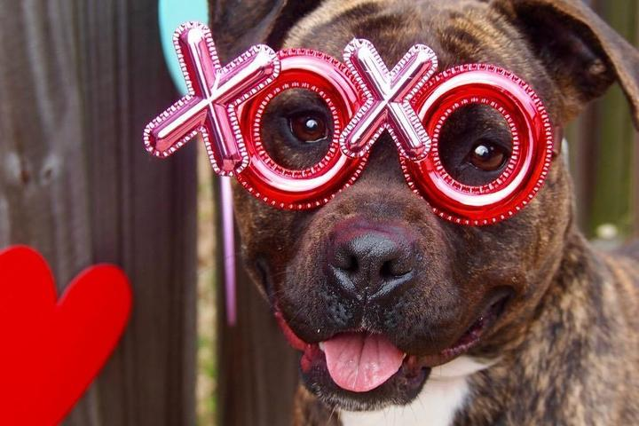 Valentine's Day Date Ideas for Celebrating Your Dog.