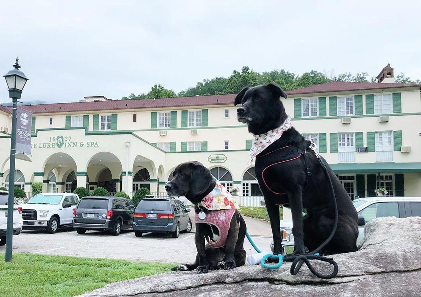 Two Black Dogs Stand in Front of The 1927 Lake Lure Inn & Spa.