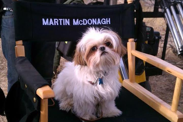 An interview with Bonny the Shih Tzu movie star and her owner and trainer, Claire Dore.