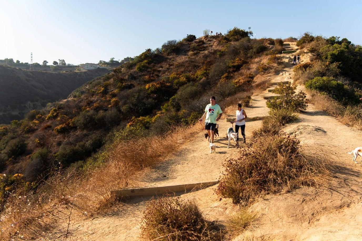 A Couple Hikes Through Runyon Canyon During With a Rescue Dog During Pet-Friendly Airbnb Experience.