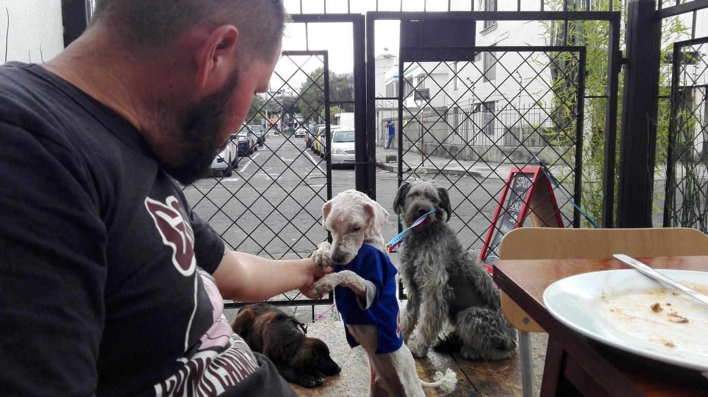 A Man Sits With Three Rescue Dogs During a Pet-Friendly Airbnb Experience in Quito.
