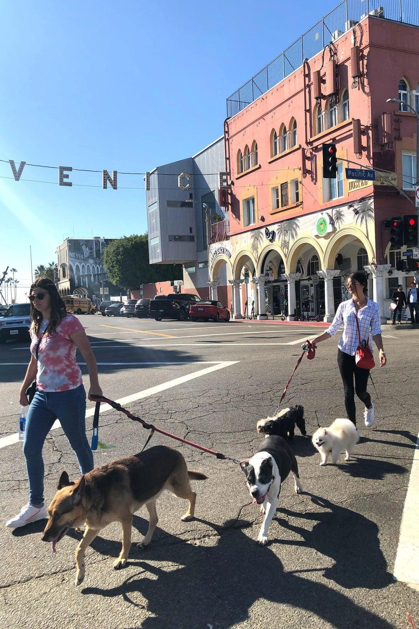 Two Women Walk a Pack of Rescue Dogs Along Venice Beach During a Pet-Friendly Airbnb Experience.
