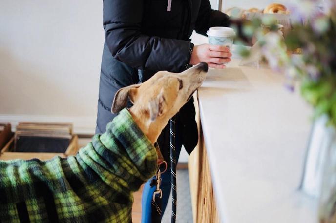 A dog sniffs a cup of joe at Urbana Cafe, a pet-friendly coffee shop.