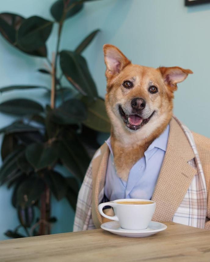 A Dog Wearing Menswear Sits With Coffee at a Pet-Friendly Coffee Shop in Portland.