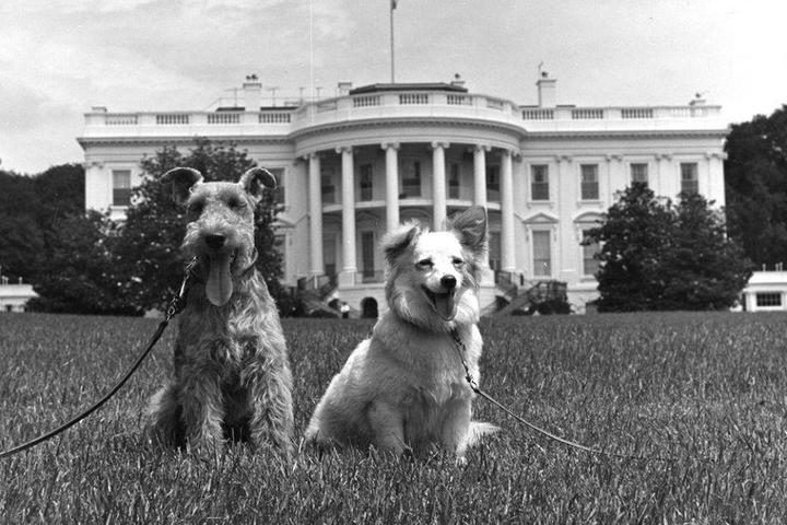 Black and White Photo of Two Dogs Who Lived in the White House.
