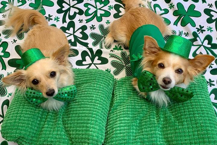 Celebrate St. Patrick's Day With This Gear for Dogs
