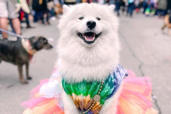 The Best-Dressed Mutts of Mardi Gras