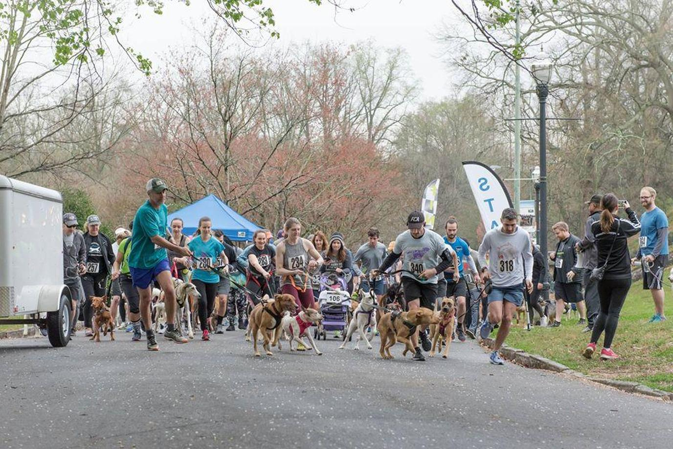 A Group of People Participate in a Pet-Friendly Spring Run With Their Dogs.