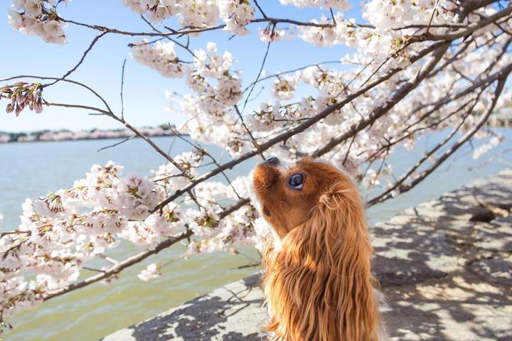 Take your dog sightseeing in Washington, D.C.!