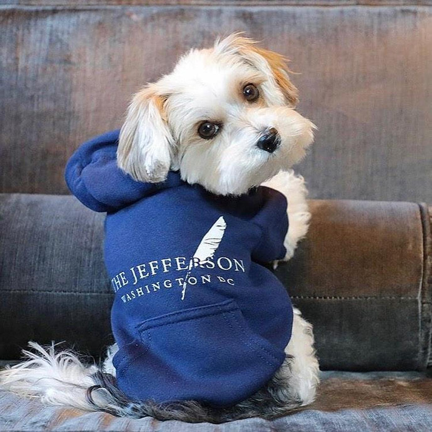Book a stay at The Jefferson pet-friendly hotel in Washington, D.C.