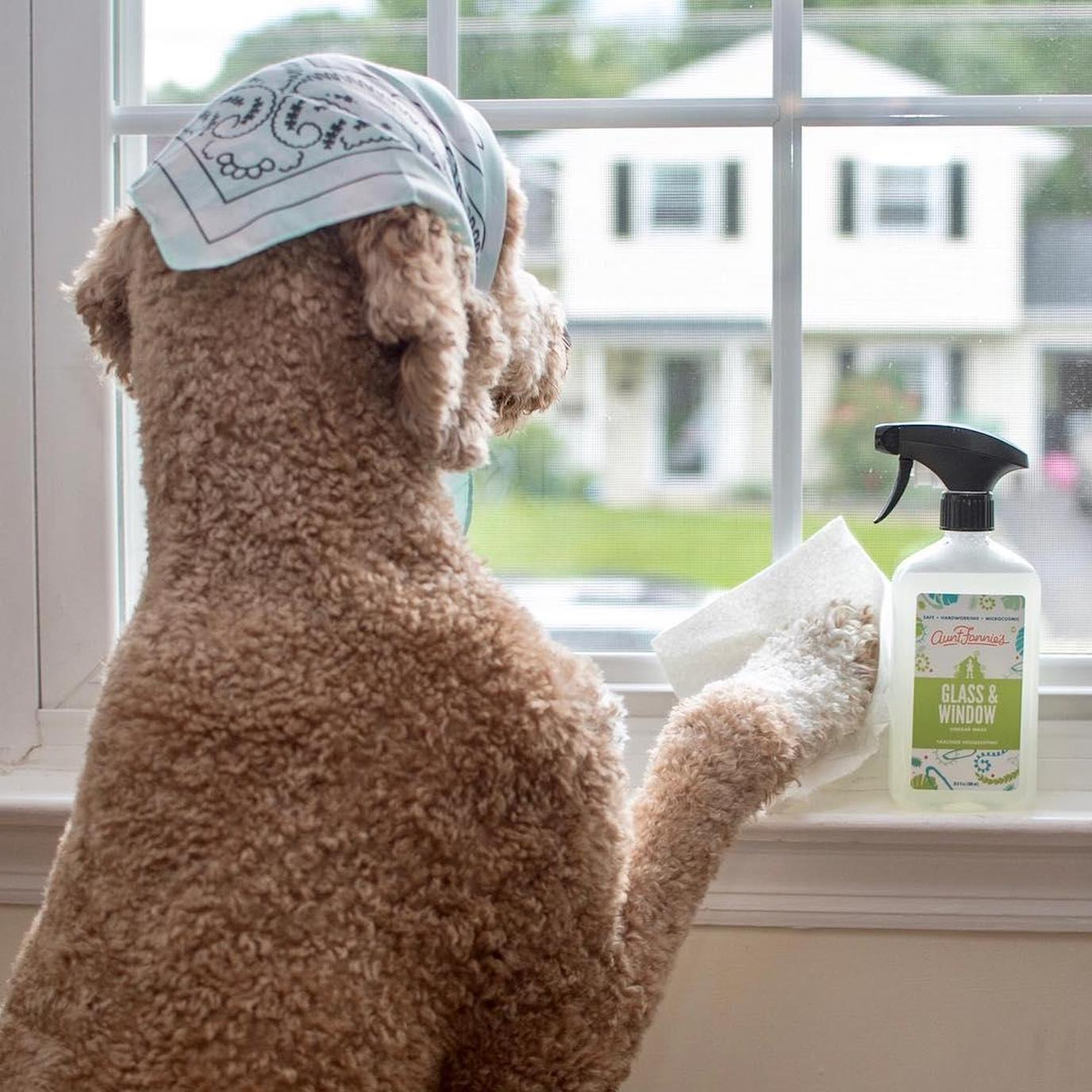 Aunt Fannie's Glass & Window Cleaning Vinegar Wash is an all-natural, pet safe window cleaner.