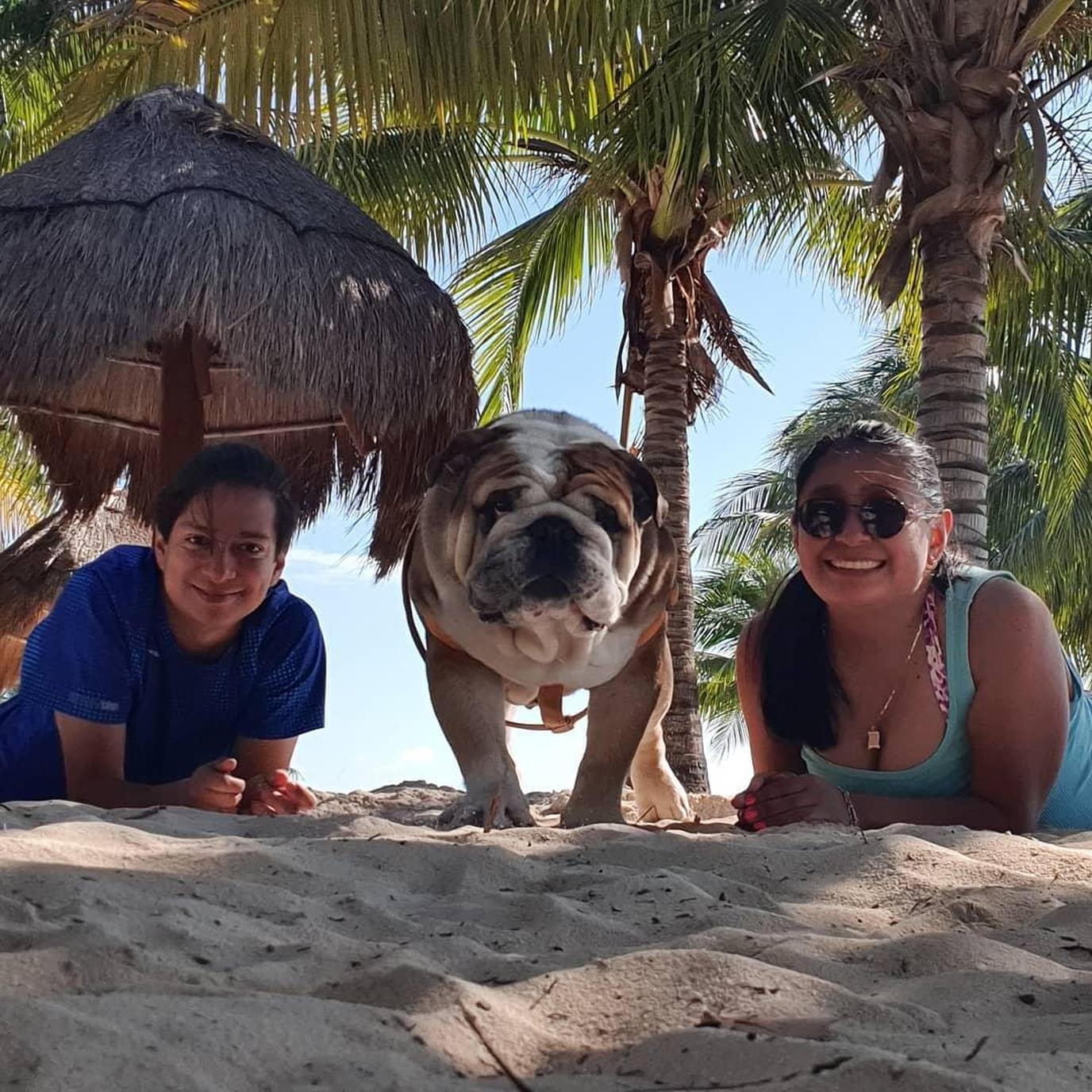 A Couple Lays on the Beach Looking at the Camera With a Bulldog Between Them in Pet-Friendly Cancun.