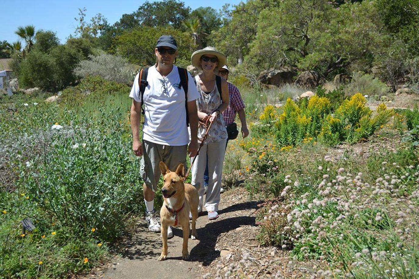 A Couple Walks Their Dog Through a Pet-Friendly Botanical Garden in Santa Barbara.