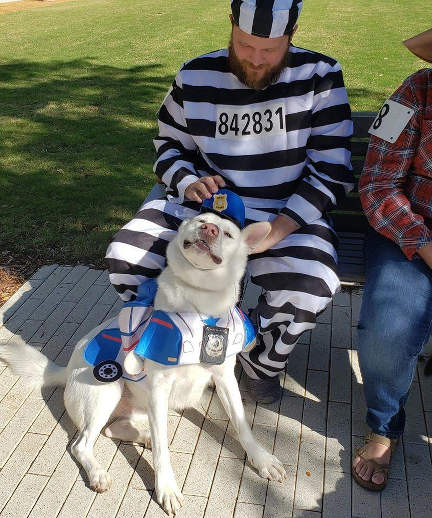 A Man Dresses As a Prisoner With a Dog Dressed As A Policeman.