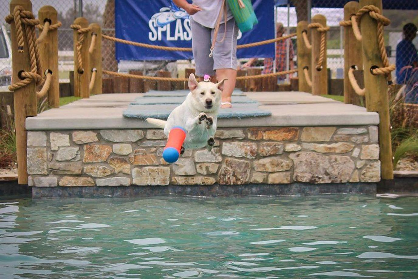 A Dog Jumps Off a Dock While Chasing a Toy at a Doggie Birthday Party.