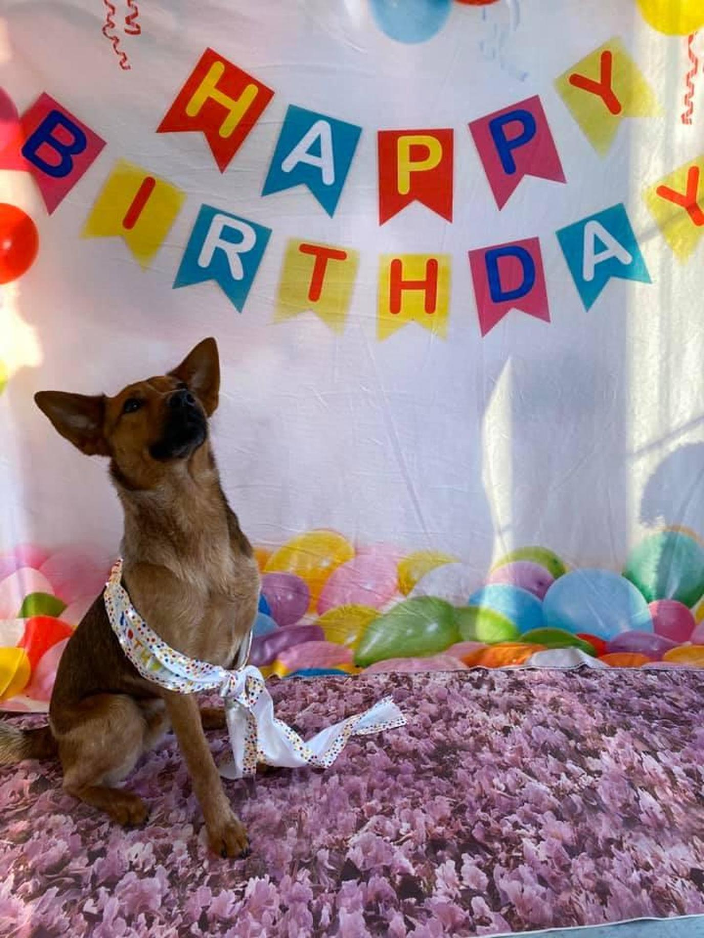 A Dog Sits in Front of a Happy Birthday Banner at His Dog Birthday Party.