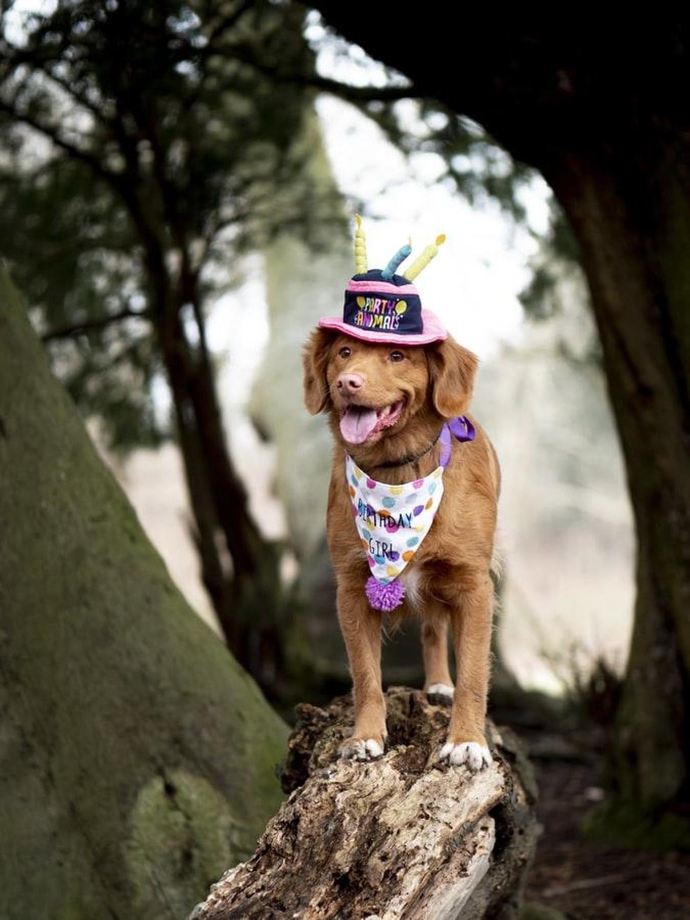 A Canine Stands on a Rock at a Dog Birthday Party at a State Park.