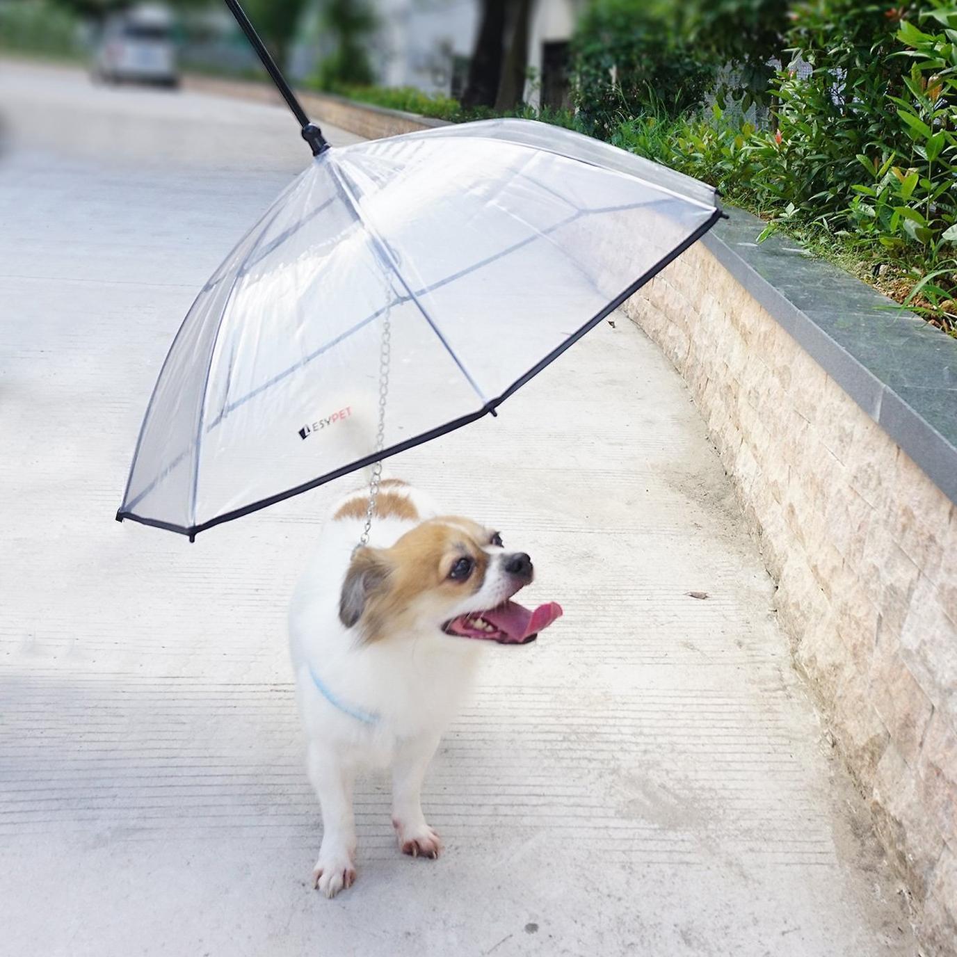 A Dog Walks Underneath the LesyPet Dog Umbrella With Leash.