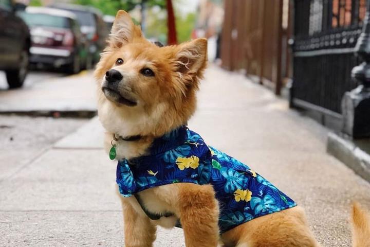 A Small Dog Wears Canada Pooch Rain Gear While Sitting on the Sidewalk.