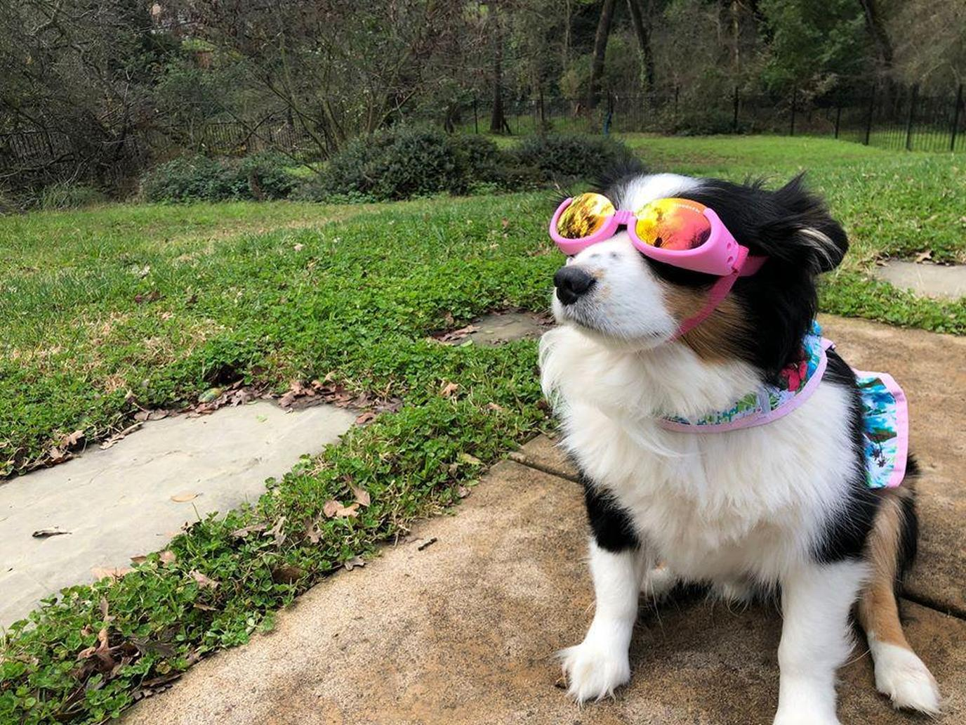 A Dog Sits in a Yard on a Rainy Day Wearing Doggles.