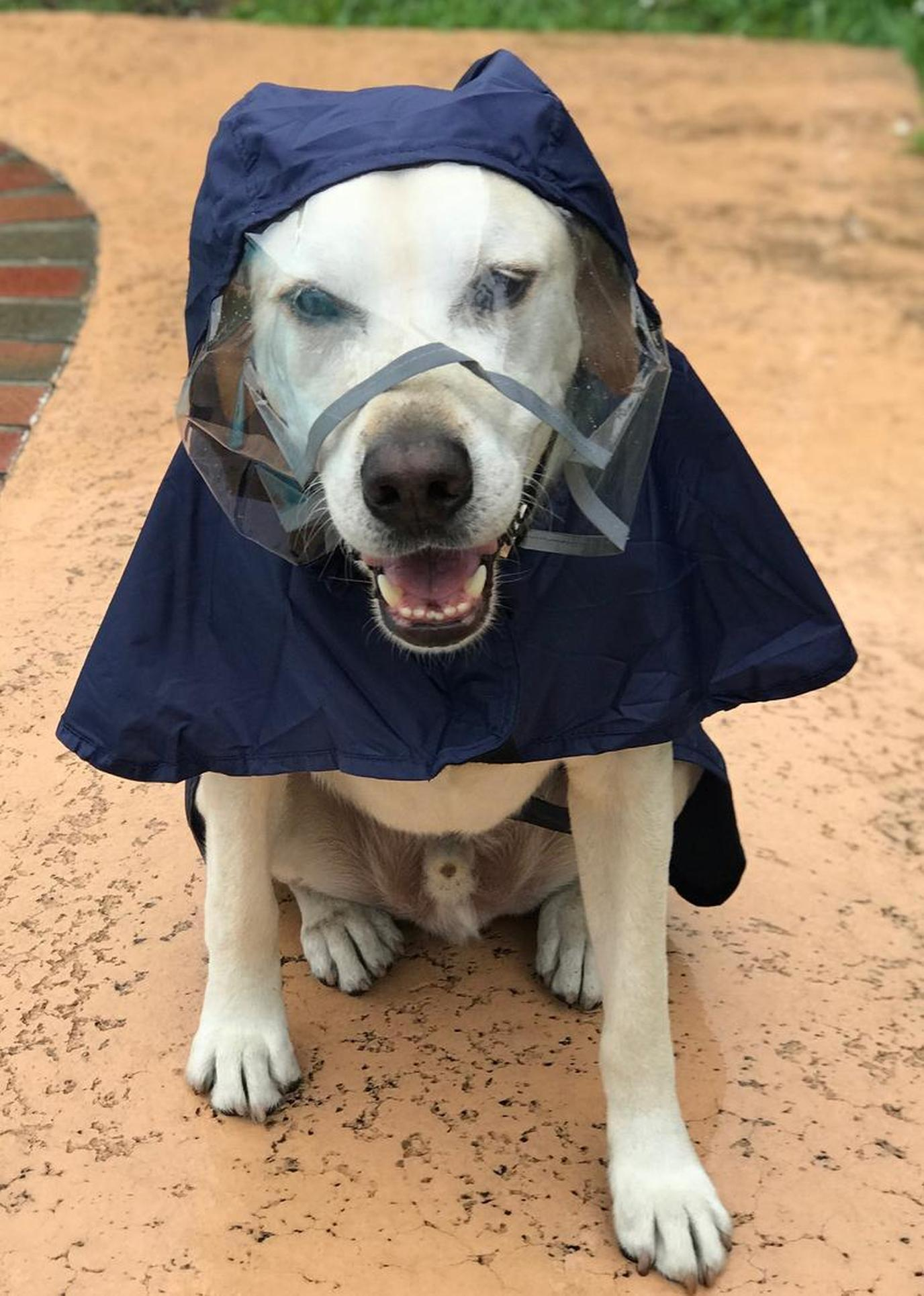 A Dog Wears a Rain Poncho from Paw2Paws.