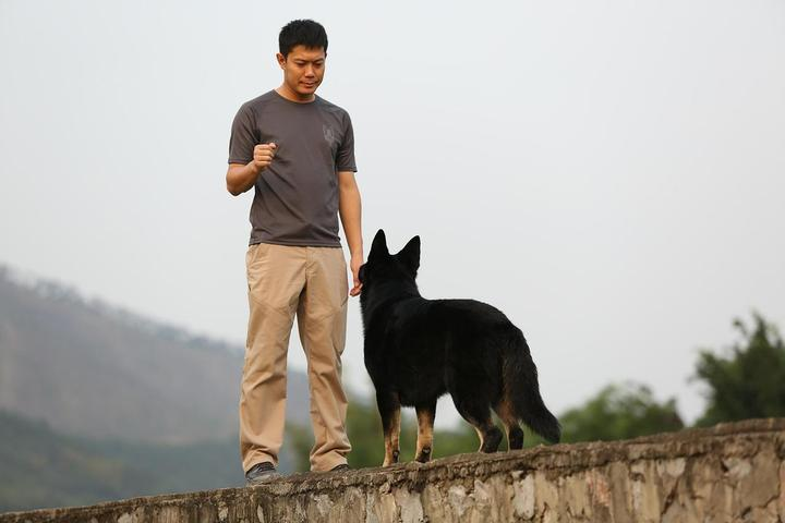 A Man Teaches A Shepherd Stay As Part of Social Distancing for Dogs.