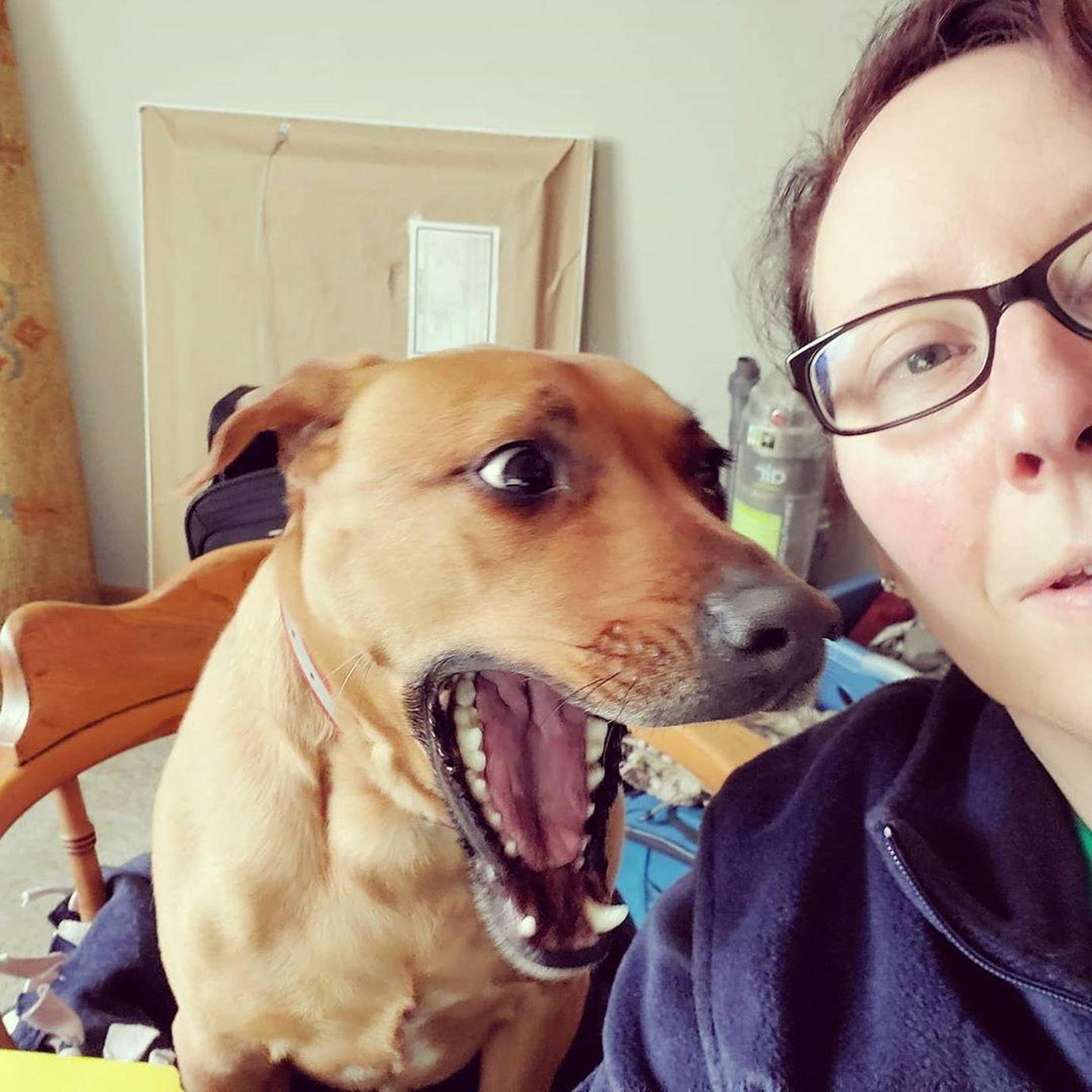 A Dog Barks at a Woman Working From Home.