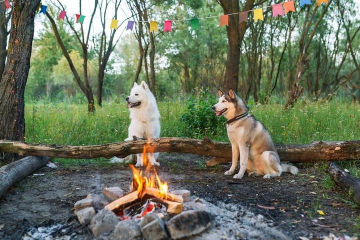 Into the Woods With Fido: 10 Dog-Friendly Cabin Getaways
