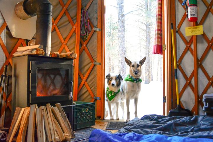This Is Gonna Yurt: Stay Outdoors in Style at a Pet-Friendly Yurt