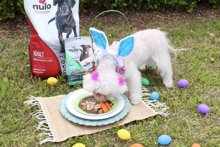 Lily enjoys a dog food recipe for Easter
