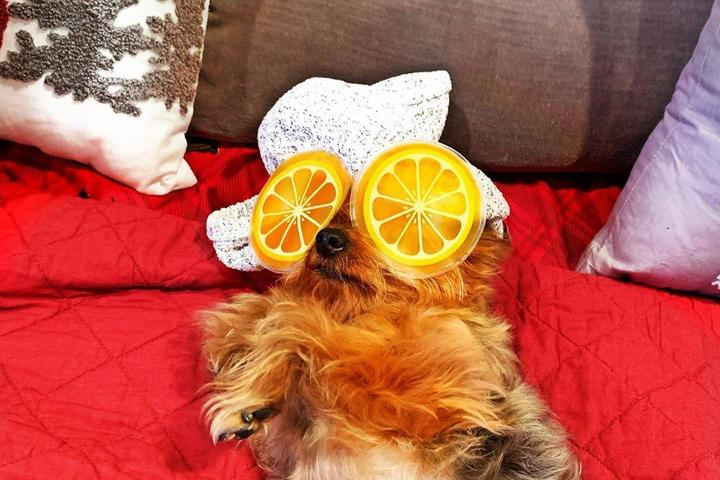 15 Dogs Who Will Get You Through the Day