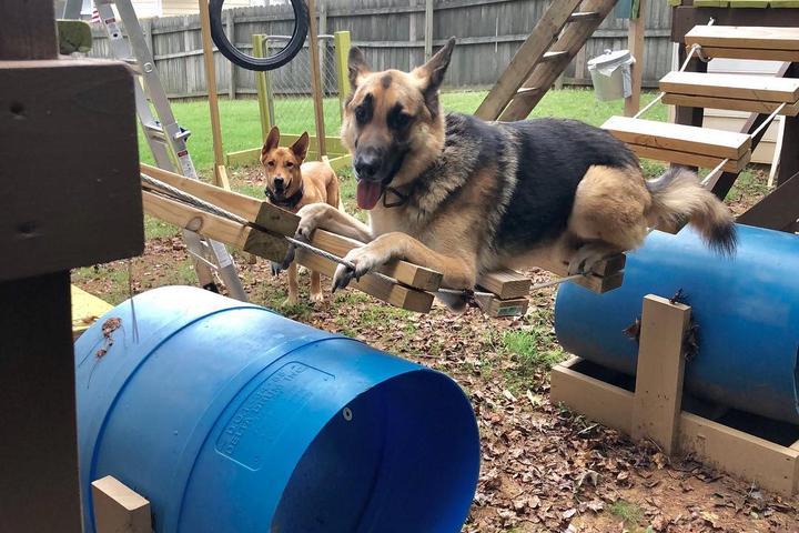 A German Shepherd enjoys his DIY dog park.