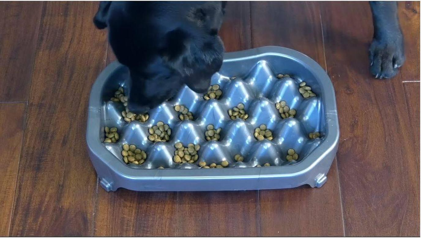 A dog test-drives his Neater Slow Feeder.