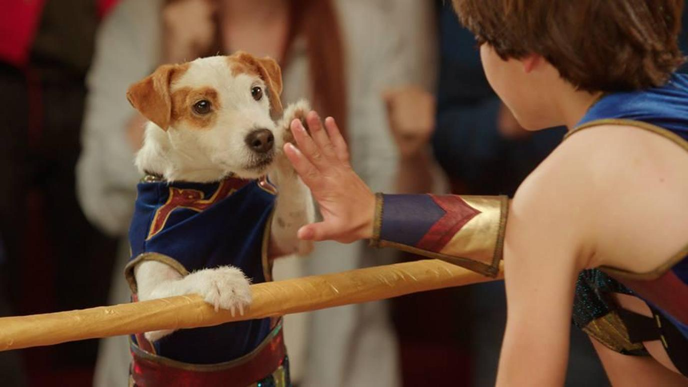"""Russell Madness"" is a fun dog movie about wrestling."