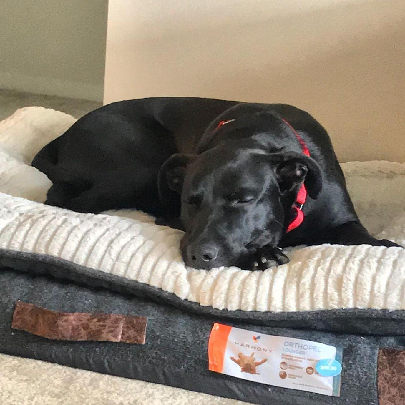This dog loves his dog bed.