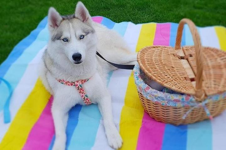Planning the Perfect Picnic With Your Pup
