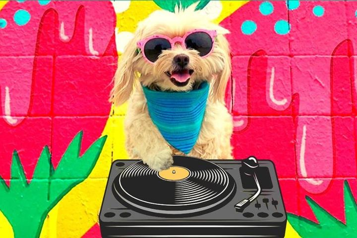 Can't-Miss Virtual Dog-Friendly Events in May