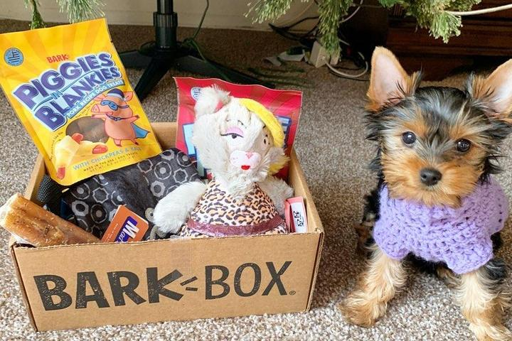 A Yorkie Sits Beside Her Barkbox Subscription for Dogs.
