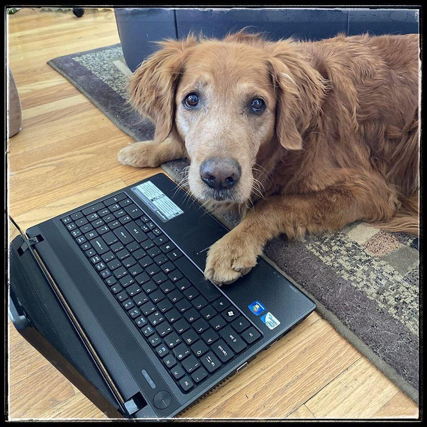 Surf Dog Ricochet is lending a paw with virtual video conferencing and learning.