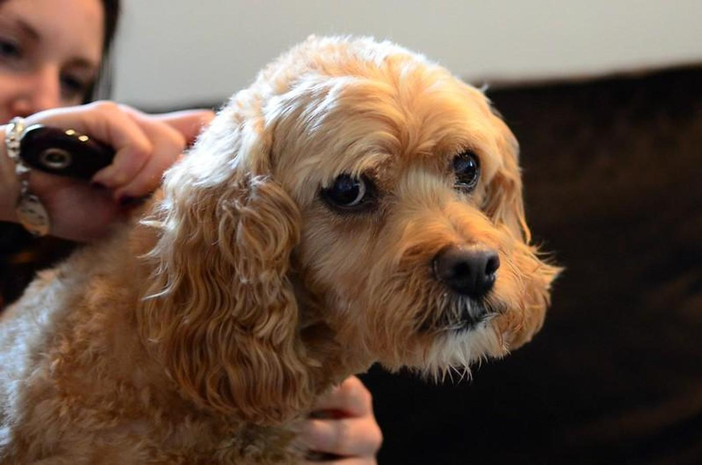 Ruff Cuts: How To Groom Your Dapper Dog At Home