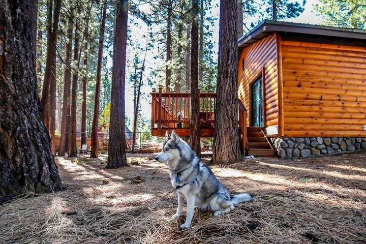 A Husky Sits Outside of a Pet-Friendly Airbnb Rental in South Lake Tahoe.