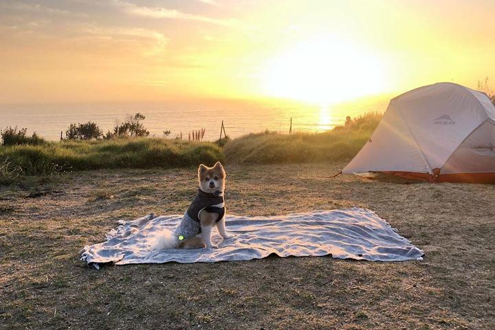 A Pomeranian Sits on the Sand at a Dog-Friendly Beachfront Campground.