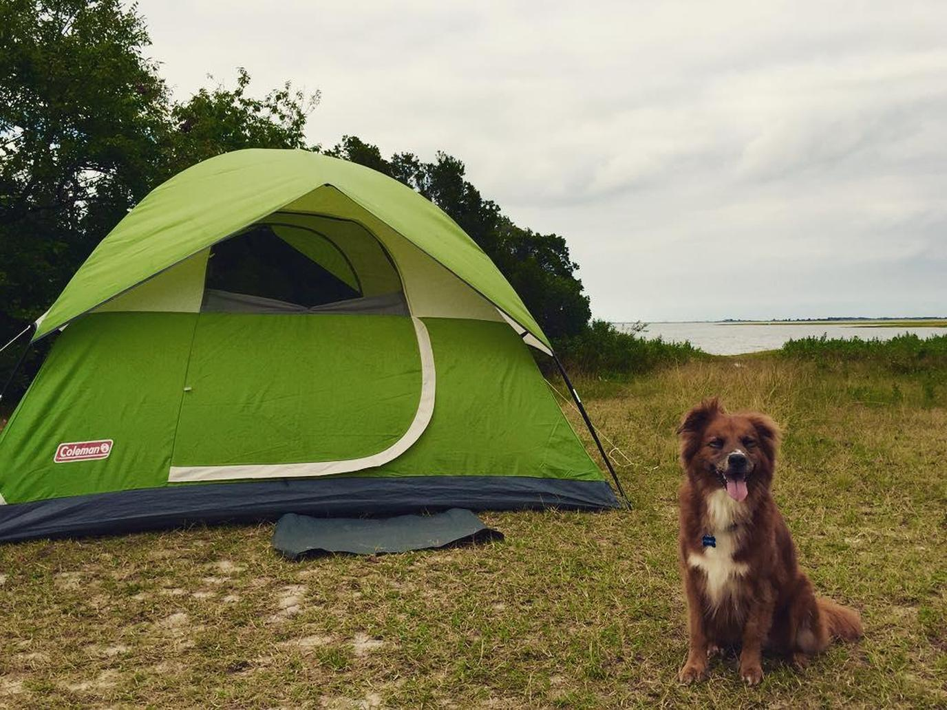 A Brown Dog Sits by a Green Tent at a Pet-Friendly Oceanfront Campground in Berlin.